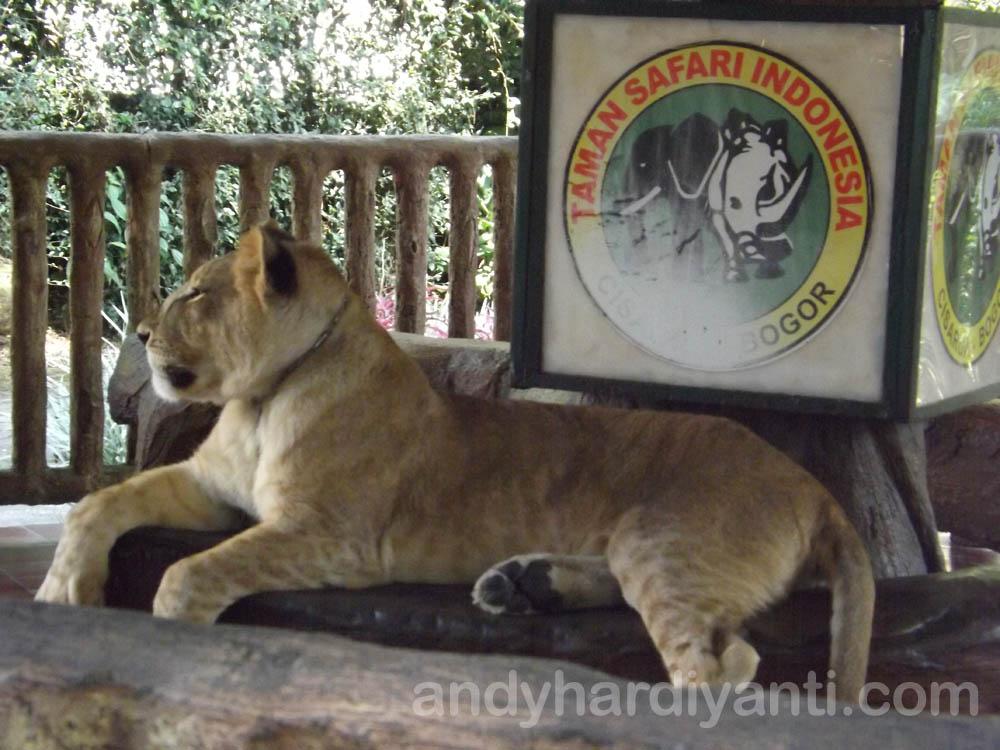 tamansafari